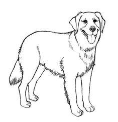 """Η κοινωνική """"ευαισθησία"""" μέσα από τα μάτια ενός σκύλου"""