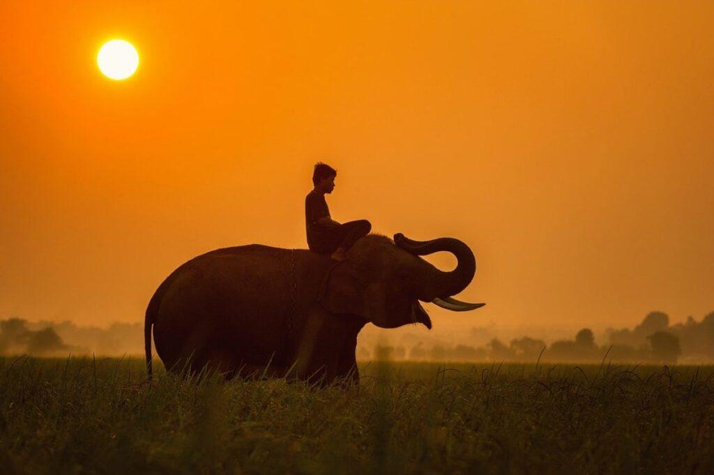 Ποιες είναι οι ιδανικές διακοπές για εσένα; Θες να νιώσεις την απόλυτη χαλάρωση ή να ζήσεις την περιπέτεια; Θες να βιώσεις την πολυτέλεια ή να έρθεις σε επαφή με τον πολιτισμό; Όποια κι αν είναι η προτεραιότητα σου, σου έχω τον ιδανικό προορισμό: Ταϊλάνδη. Η Ταϊλάνδη αποτελεί προορισμό κατάλληλο για όλες τις κατηγορίες ταξιδιωτών. Είναι ένα μοναδικό μέρος , το οποίο περιλαμβάνει υπέροχες, καταγάλανες παραλίες, εξωτική ομορφιά και άπειρο πολιτισμό. Δεν πρόκειται απλώς για ένα ταξίδι, αλλά για μία πρωτόγνωρη εμπειρία, που γεννά αναμνήσεις που διαρκούν μία ζωή.